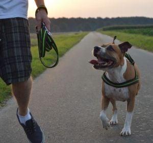 ¿Cuántas horas debes pasear a tu perro?