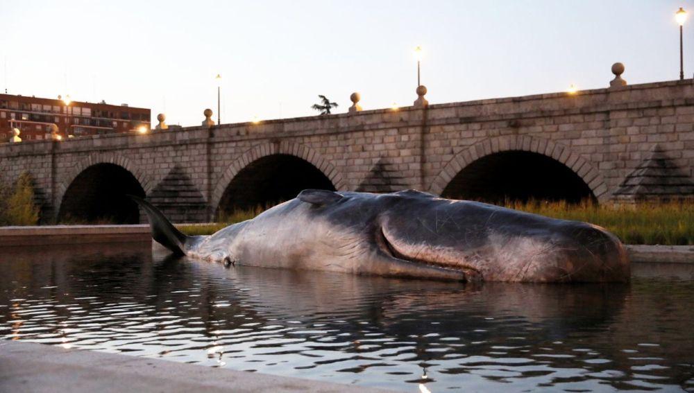 Un Cachalote en el río Manzanares