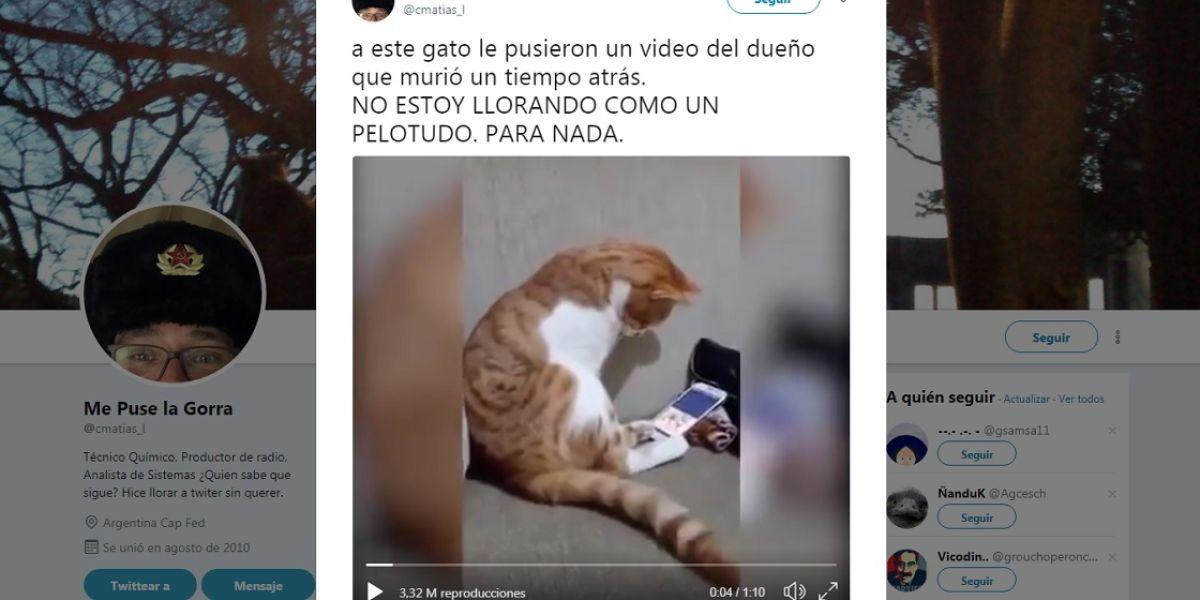 Este gatito ve un vídeo de su dueño fallecido y su reacción te hará llorar