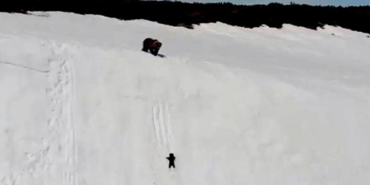 Osezno trepando una montaña