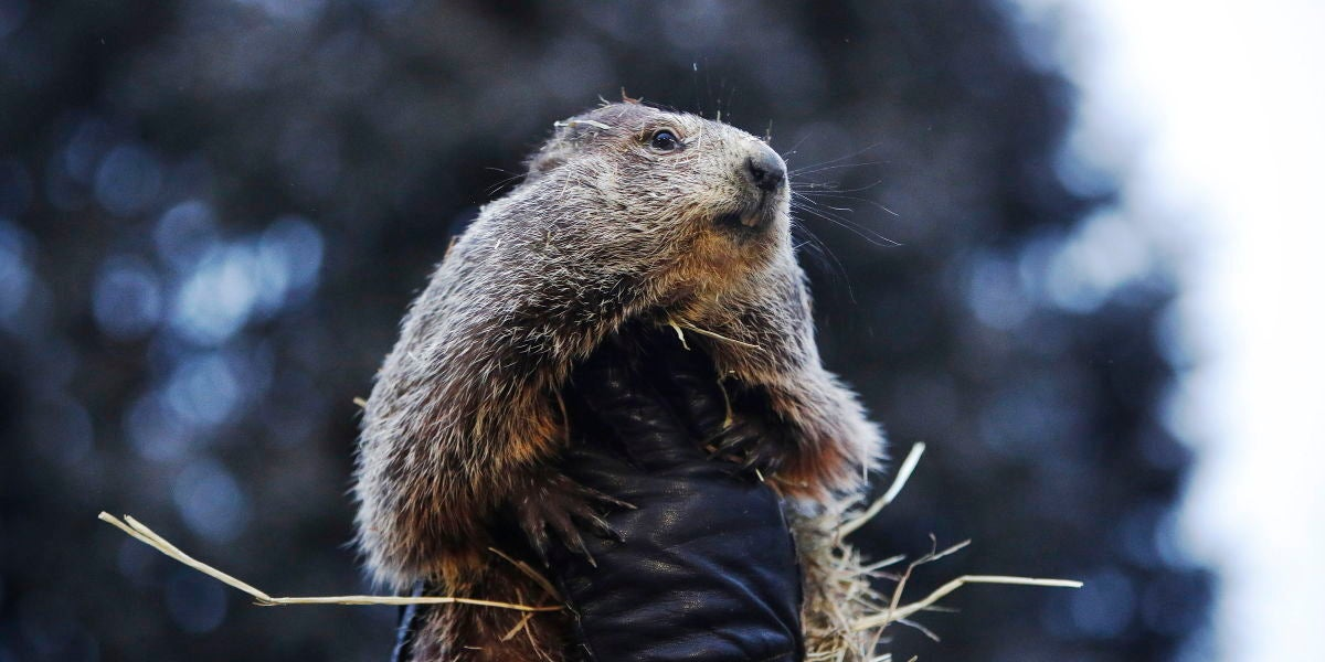 Día de la marmota (02-02-2019)