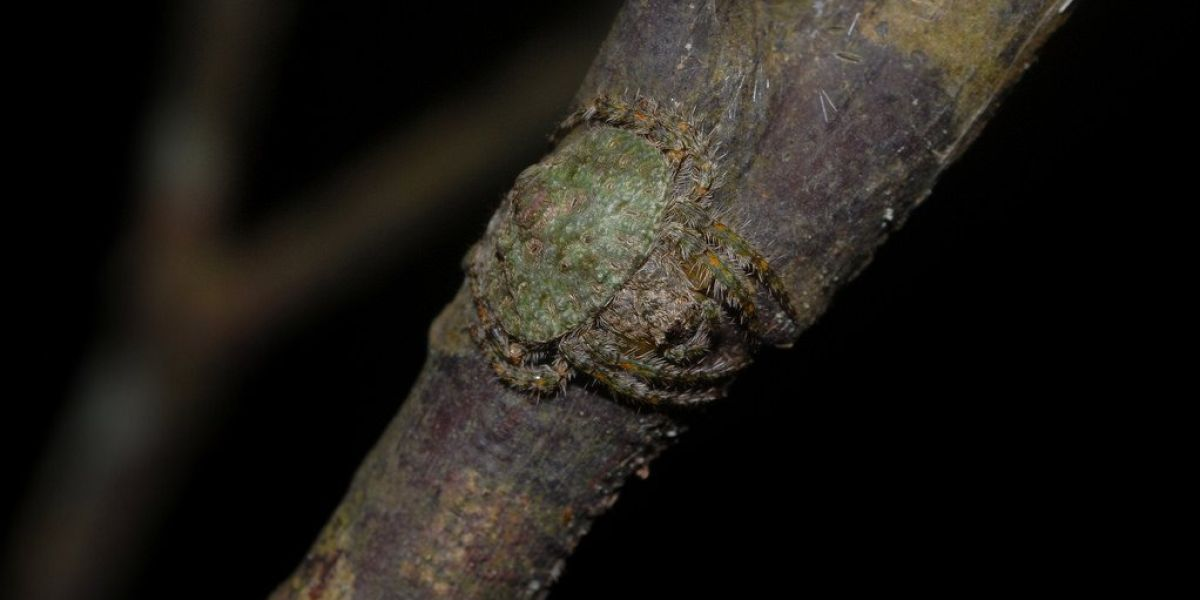 Araña camuflada en un tronco