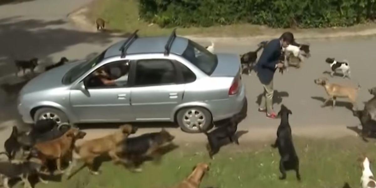 Un reportero atacado por un grupo de perros