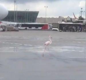 El flamenco en el aeropuerto de Palma