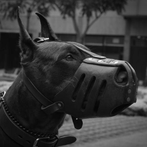 Un perro con bozal