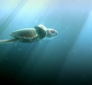 'Lemon', el corto sobre la contaminación en el mar