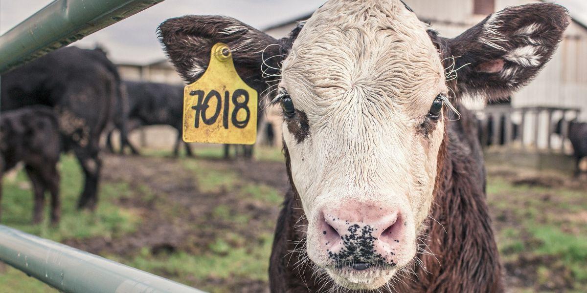 La ONU pide reducir el consumo de carne para frenar el cambio climatico