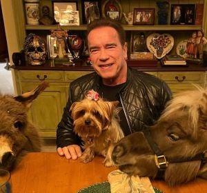 La cuarentena de Arnold Schwarzenegger: un poni, un burro y un mensaje de concienciación