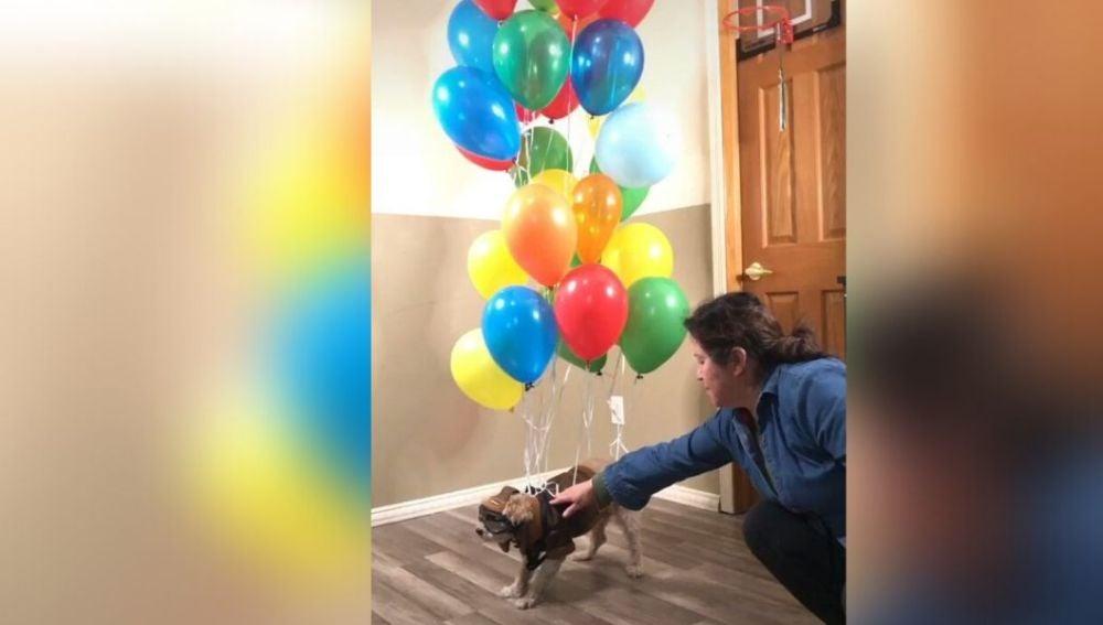Atan a un perro a un montón de globos y lo hacen volar como en la película 'Up'