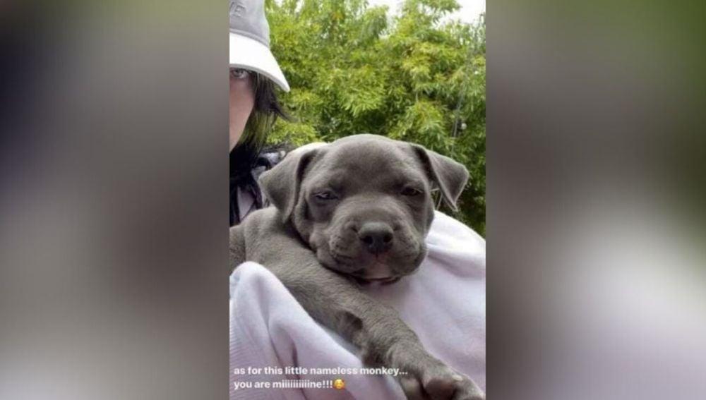 El perrito que Billie Eilish ha adoptado