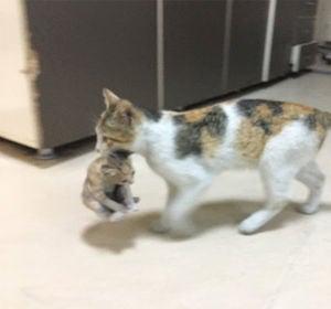 Una gata llevando a su cría enferma al hospital