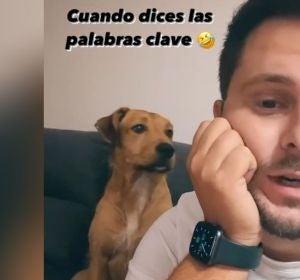 La entrañable reacción de un perro cuando su dueño dice las palabras 'calle' y 'premio'