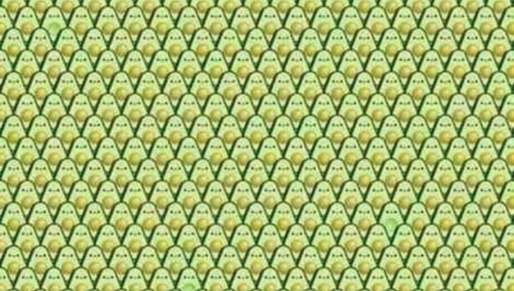 El reto visual de los aguacates