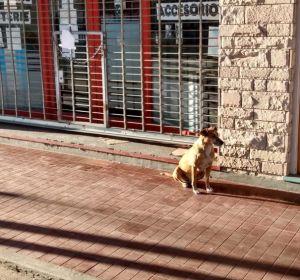 Bianca, la perra que lleva días esperando a las puertas del negocio de su dueña fallecida