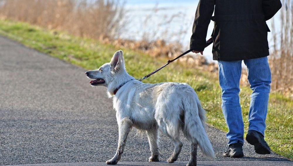 Estudian si la muerte de casi 1.700 mascotas fue provocada por los collares antipulgas de Seresto