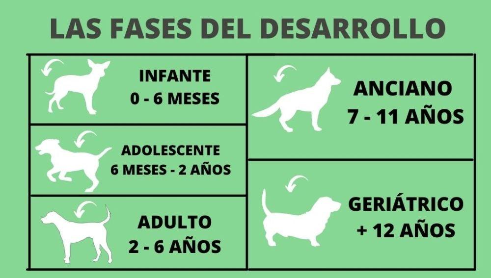 ¿En qué fase del crecimiento se encuentra un perro en función de la edad?