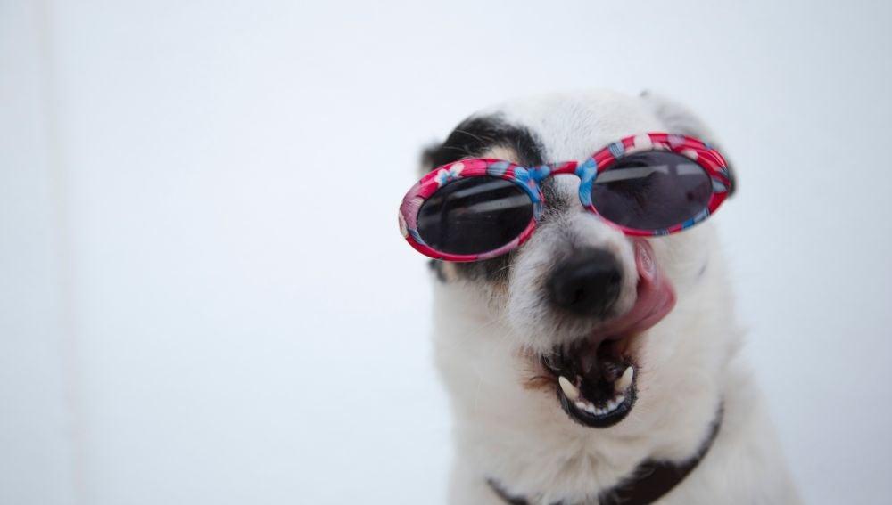 Las razas de perro que mejor soportan el calor y las que peor llevan las altas temperaturas