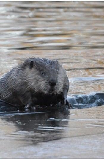 Descubre 10 especies invasoras dañinas para sus nuevos ecosistemas