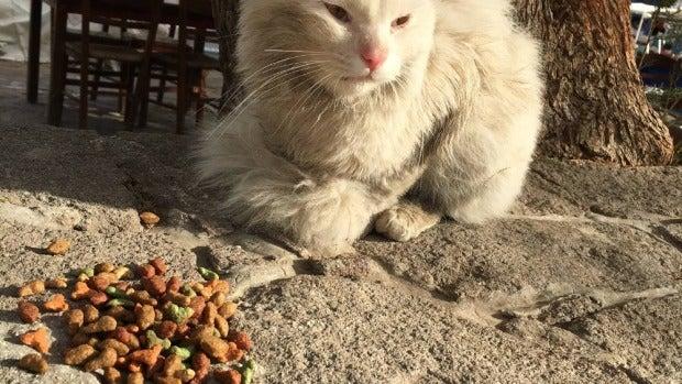 Kunkush, el 'gato refugiado'