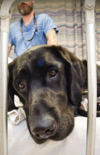 Mahe, el perro que cuida de su dueño autista hasta en la cama del hospital