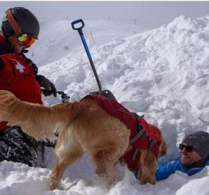 Mason, el perro que se juega la vida en la nieve para salvar la vida de otras personas