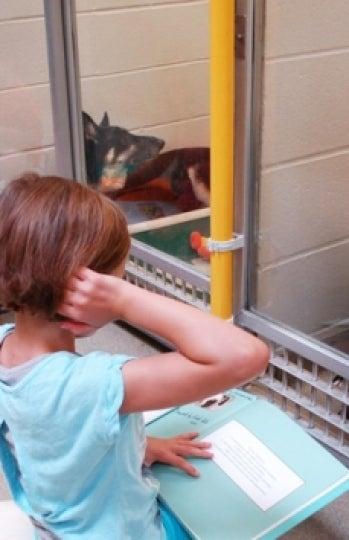 Niños leyendo cuentos a perros abandonados