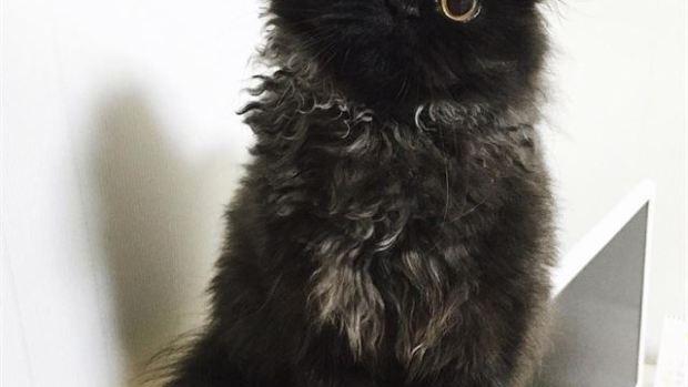 Gimo, el gato que sabe ponerse de pie