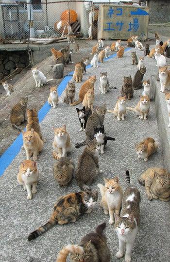 Aoshima, la isla de gatos