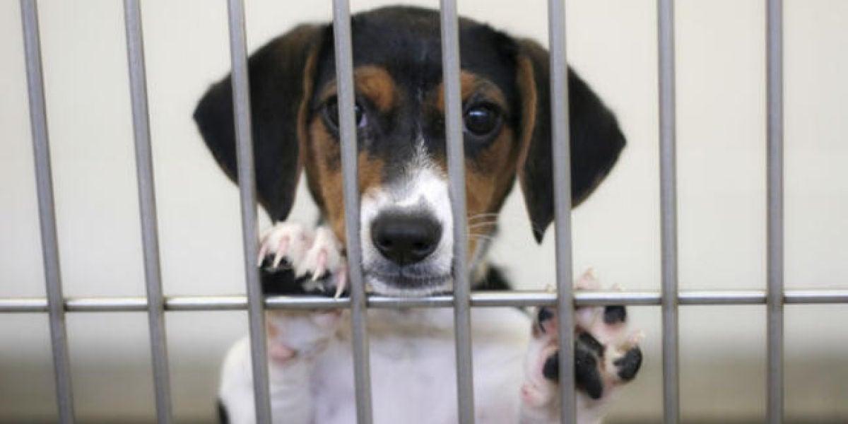 Prohíben las tiendas de animales que vendan mascotas que provengan de criaderos en Boston