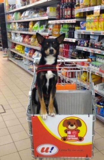 ¿Te imaginas hacer la compra en el supermecado con tu perro?