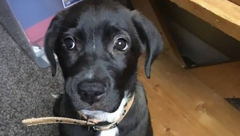 Hefty, el perrito después de ser encontrado