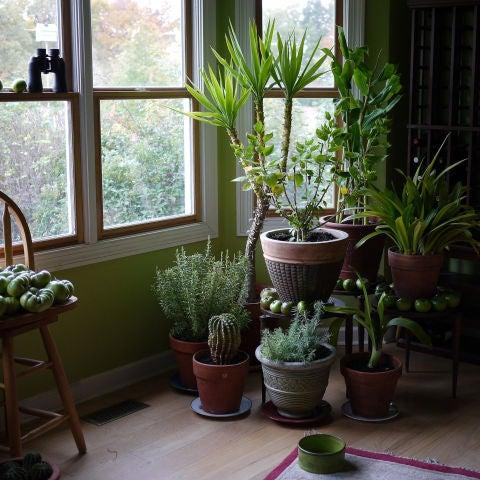 Estas son las plantas que mejor limpian el aire de tu casa