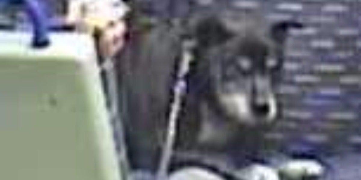 El perro que fue maltratado en un tren