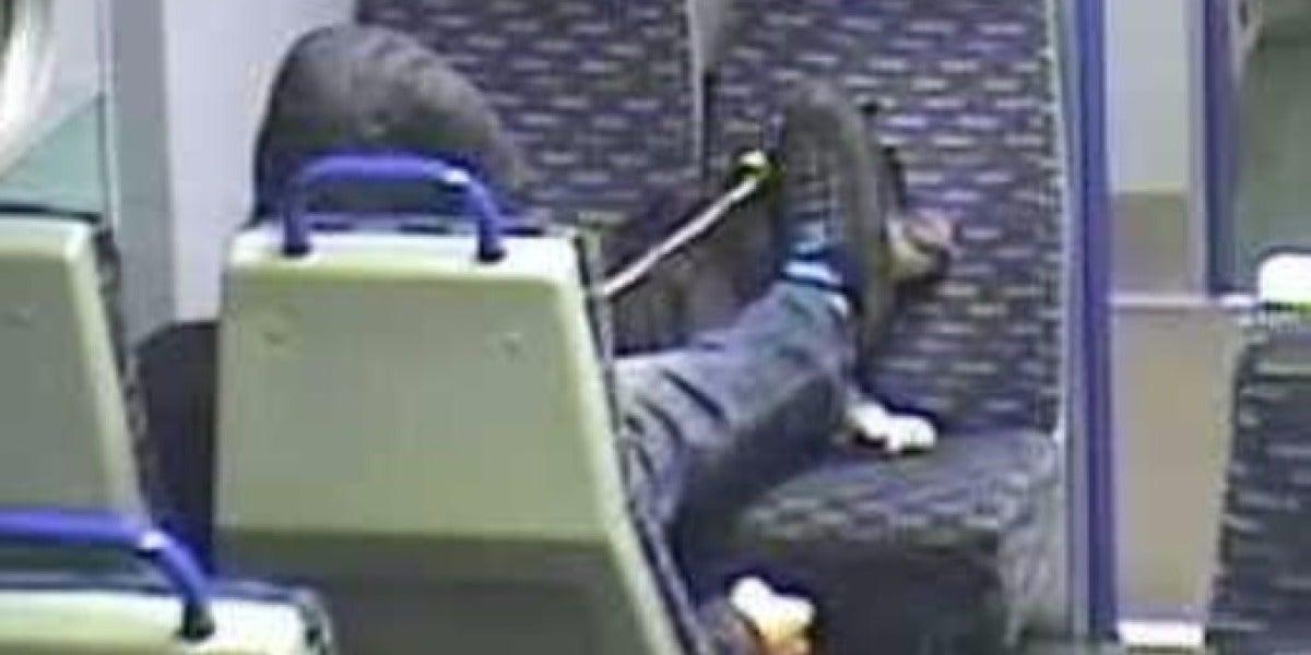 Maltrato animal en un tren de Reino Unido