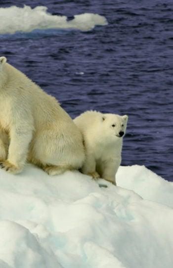 El Ártico se derrite.