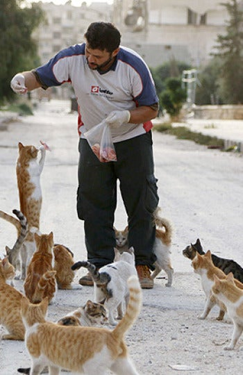 Mohammad Alaa Aljaleel cuidando a los gatos