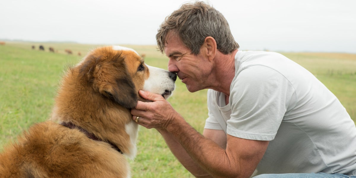 A dog's purpose, con Dennis Quaid