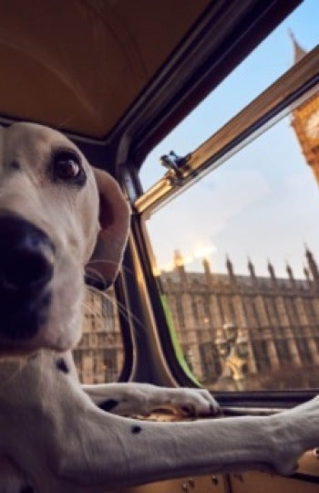 Perro disfrutando del Big Ben