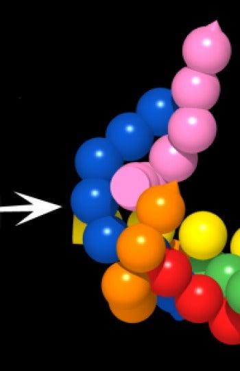 Científicos consiguen ver en directo y en 3D cómo trabajan proteínas de células