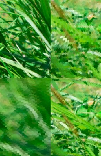Lagarto visto por una abeja (abajo izquierda) o por una libélula (derecha)