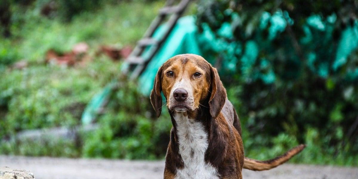 El Congreso aprueba la prohibición de cortar la cola a los perros