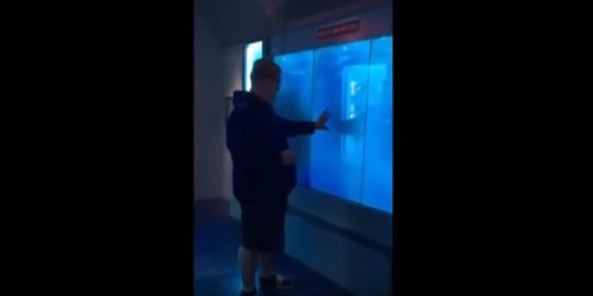 """Un tiburón rompe """"el cristal"""" del acuario para atacar a un visitante"""
