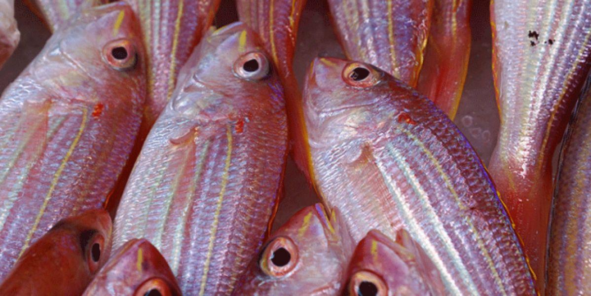 pescado_643x397