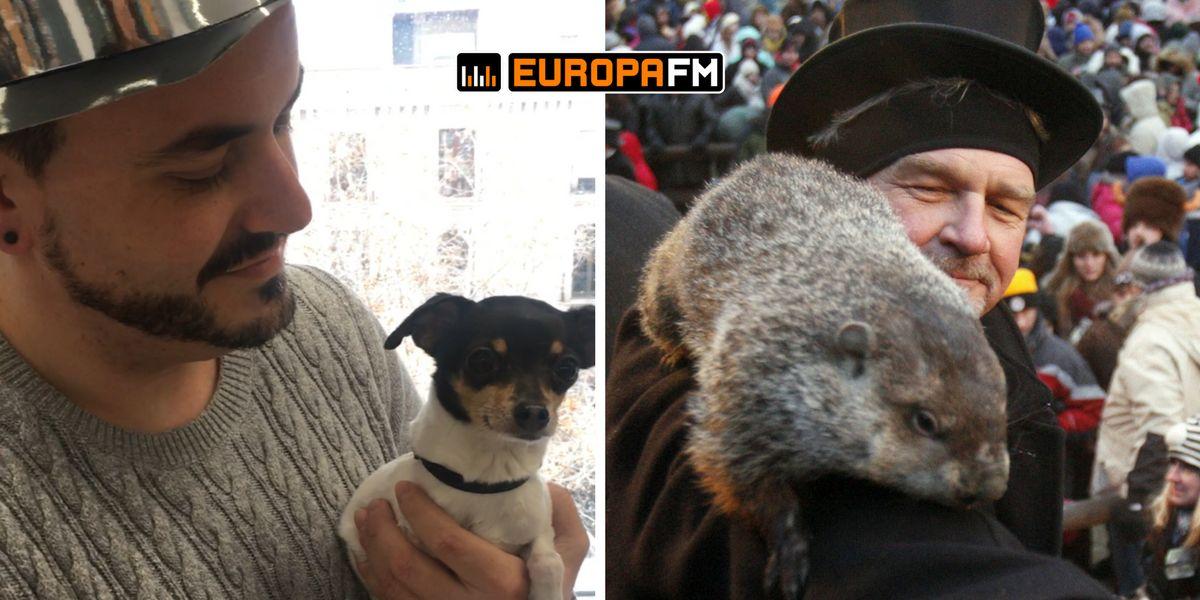 El Señor Tropi vs la marmota Phil