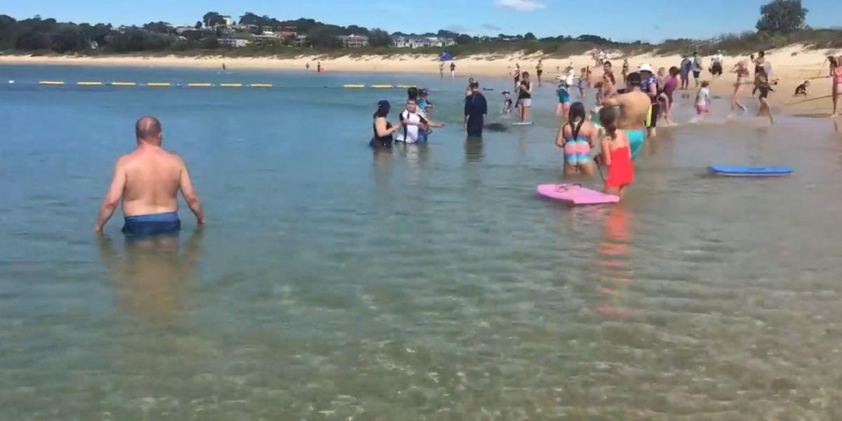 Una foca da un susto a los bañistas en Nueva Gales del Sur