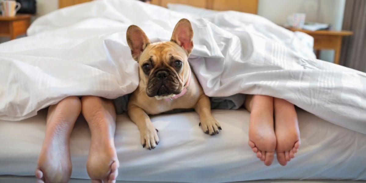 Un perro en la cama con sus dueños