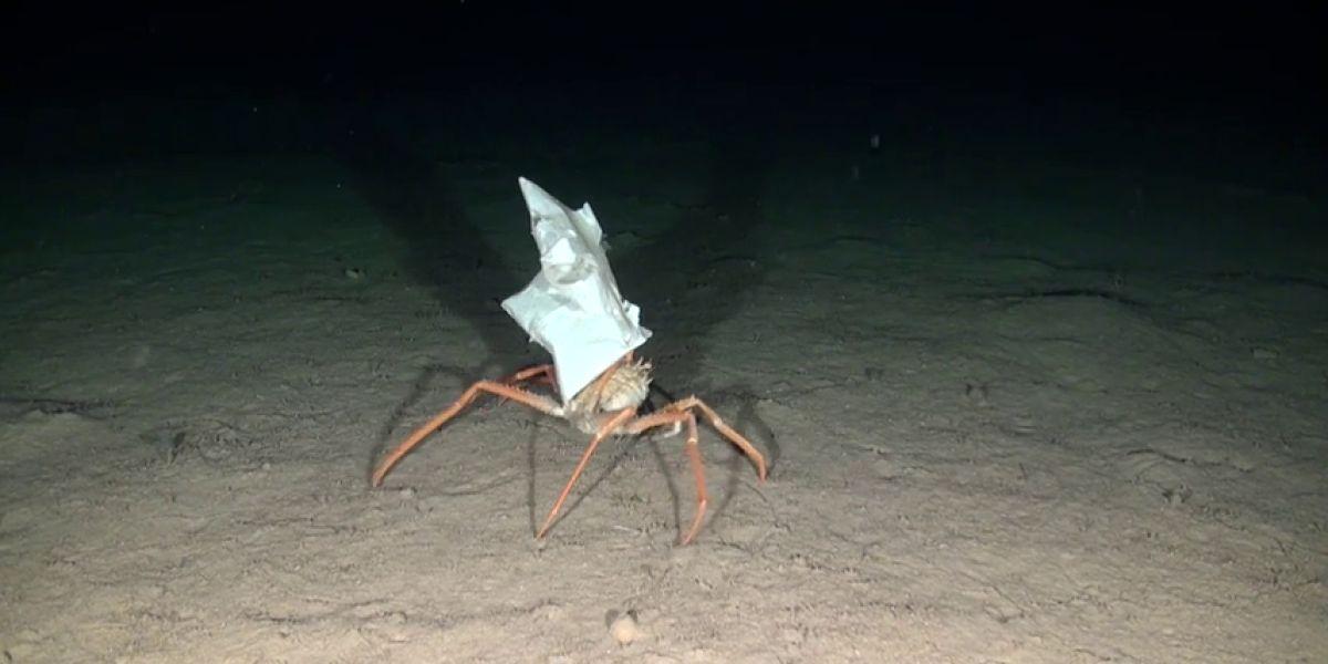"""Lucha mundial contra los residuos marinos: """"en 2050 habrá más plásticos que peces en el océano"""""""
