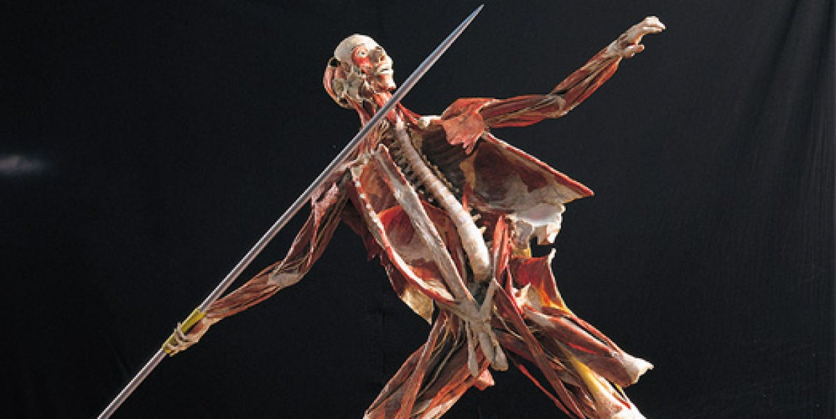 Exposición Body Worlds Vital