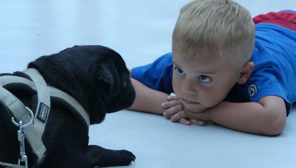 La terapia con perros muestra resultados prometedores en niños con dificultades del habla