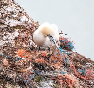 Un ave entre redes de plástico